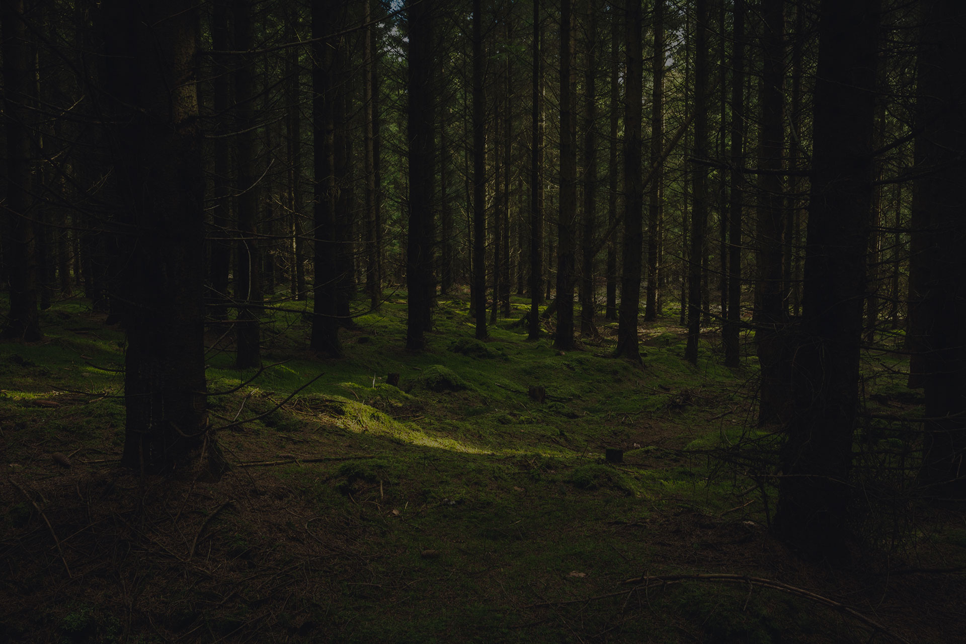 Rays of sun through the thick forest