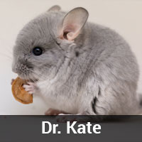 Dr. Kate