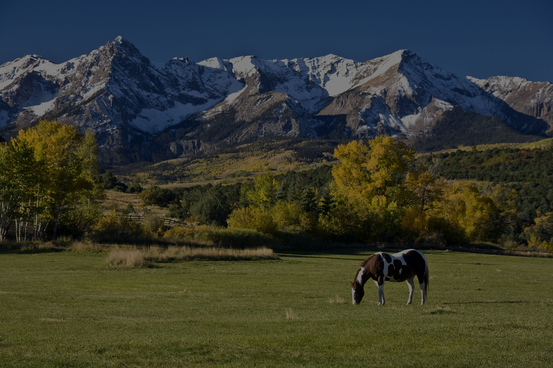 Colorado Horse Grazing